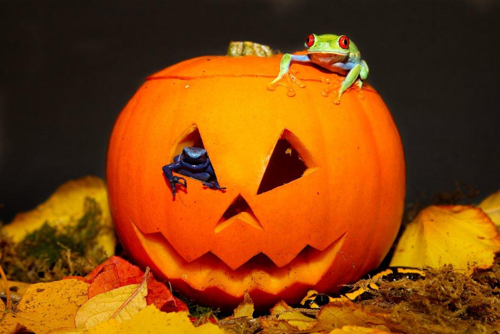 pumpkins-martin-mere-halloween