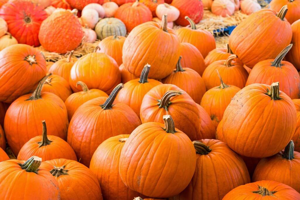 Pumpkins - Halloween Autumn